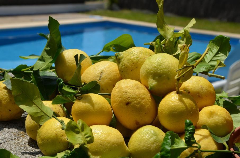 A limoness