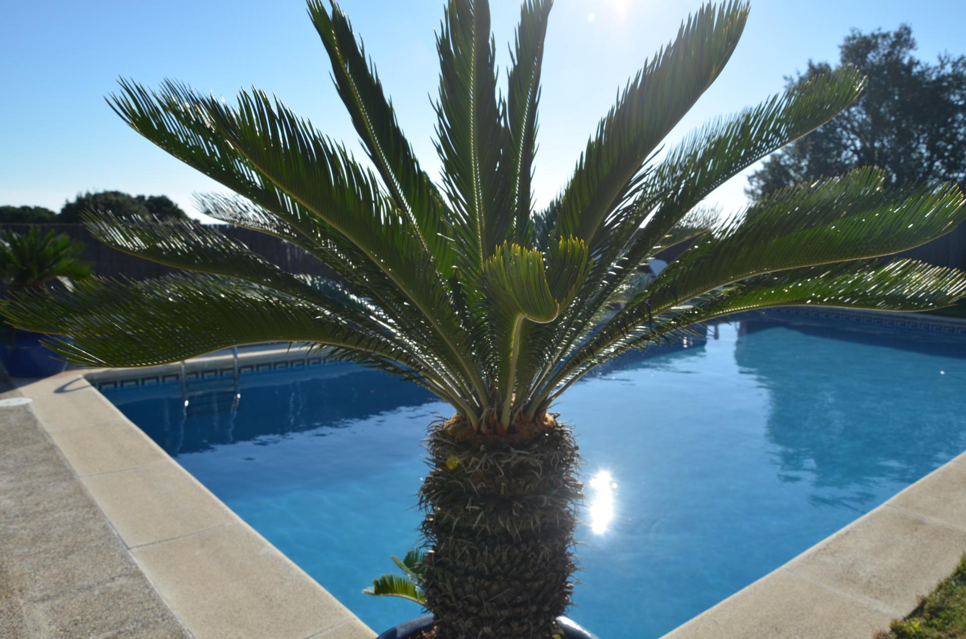 A palmierdsc 0165