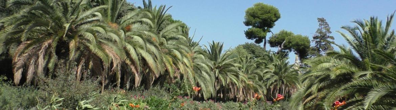 Aaa barca palmiers