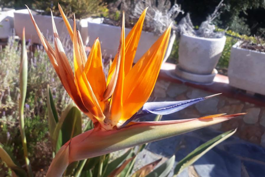 Xxx flor linda